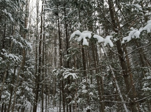 10.woods.2
