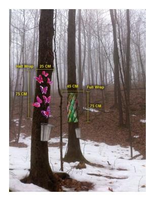 Tree Wrap sizes